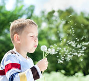 Beautiful Boy in the park blowing on dandelion Royalty Free Stock Photography