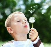 Beautiful Boy in the park blowing on dandelion Stock Photography
