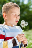 Beautiful Boy in the park blowing on dandelion Stock Images