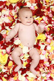 Beautiful boy in a rose plants. Shot in studio stock images