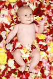 Beautiful boy in a rose plants. Boy in a rose plants stock images
