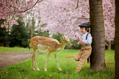 Beautiful boy, standing in a cherry blossom gardenwith little fo Royalty Free Stock Photo