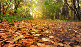 Beautiful branch of an autumn Royalty Free Stock Image