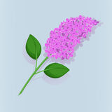 The beautiful branch of blooming lilacs on blue background, eps 10. Contains transparent objects. Stock Image