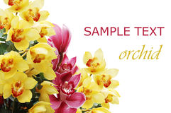Beautiful branch of a fresh orchid Royalty Free Stock Images