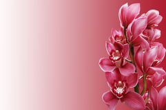 Beautiful branch of a fresh orchid Stock Images