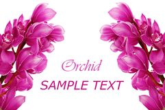 Beautiful branch of a fresh orchid Royalty Free Stock Photo