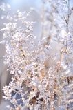 Beautiful branch covered with ice Stock Images
