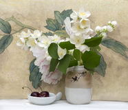 Beautiful branch of jasmine in a vase Royalty Free Stock Images