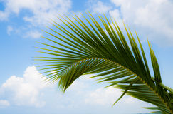 Beautiful branch of palm tree on a tropical island in front of the sky Stock Image