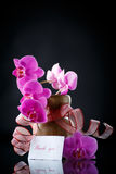 Beautiful branch Phalaenopsis with gratitude Stock Photography