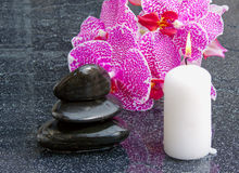 Beautiful branch pink orchid flower with back stones reflection Royalty Free Stock Photography