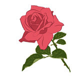 Beautiful branch of pink rose, isolated on white background. Botanical flower silhouette. Flat stylization vintage color. Vector illustration Royalty Free Stock Photo