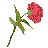 Beautiful branch of pink rose, isolated on white background. Botanical flower silhouette. Flat stylization vintage color. Vector illustration Stock Photography