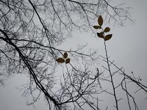 Beautiful branch in the sky. At winter days on the hill royalty free stock photo