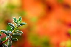 Beautiful branch of succulent plant royalty free stock image