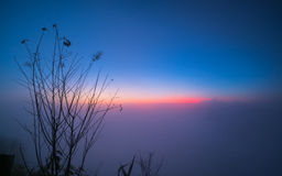 Beautiful branch of tree and foggy sunrise landscape in the morning. Royalty Free Stock Photography