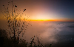Beautiful branch of tree and foggy sunrise landscape in the morning. Royalty Free Stock Images