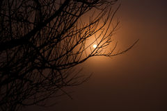 Beautiful branch of tree and foggy sunrise landscape in the morning Royalty Free Stock Images