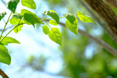 Beautiful branch of tree with green leaf Stock Images
