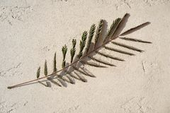 Beautiful branch of tree with small leaves and interesting picture of shadow on concrete gray background. stock images