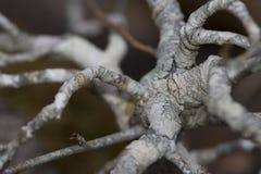 Beautiful branchs tree Royalty Free Stock Image