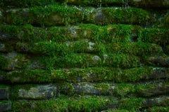 Beautiful brickwork in green moss. Tiksturnaya brickwork in green moss for the background on and writing texts stock images