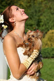 Beautiful bride. The laughing bride with the yorkshire terrier Stock Image