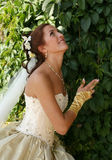 Beautiful bride. The beautiful bride on a green background Stock Photos