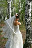 Bride in birch grove Stock Photos