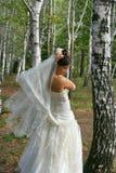 Bride in birch grove stock photos