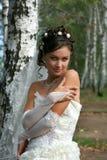 Beautiful bride in birch grove stock image