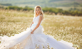 Beautiful bride in a field. Of daisies Royalty Free Stock Photography