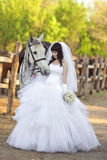 Beautiful bride  with a grey horse Royalty Free Stock Photos