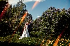 Wedding couple. Beautiful bride and groom. royalty free stock photography