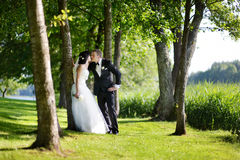 Beautiful bride and groom. By a tree Royalty Free Stock Photography