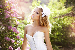 Beautiful bride. In a lavender garden Royalty Free Stock Image