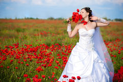 Beautiful bride in a poppy field Stock Photos