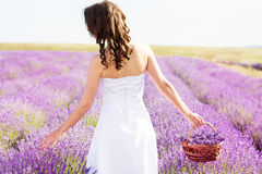 Beautiful bride posing at field of lavender Royalty Free Stock Image