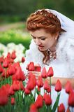 Beautiful bride and red tulips Stock Photos