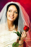 Beautiful bride with a rose. Studio portrait of a beautiful brunette bride with a red rose in her hands Royalty Free Stock Photo