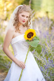 Beautiful bride with sunflower. Looking at  you Royalty Free Stock Image