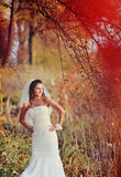 Beautiful bride  in forest Stock Photography