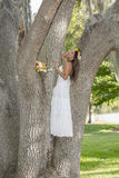Beautiful Bride Up In A Tree Royalty Free Stock Photos