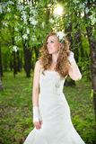 Beautiful bride in a white dress in blooming gardens in the spring Royalty Free Stock Images