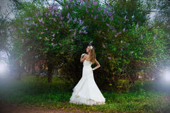 Beautiful bride in a white dress on a lilac background in spring Royalty Free Stock Photo