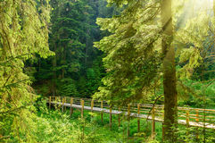 Beautiful bridge in the forest with rays of sun Royalty Free Stock Photography
