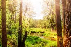 Magical sun lights on forest field, river, swamp stock images