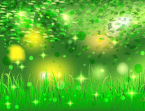 Beautiful bright abstract forest Stock Photo