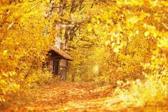 Beautiful bright autumn background. Yellow and orange trees in the forest. Autumn leaves fall from branches on a sunny day. stock photo